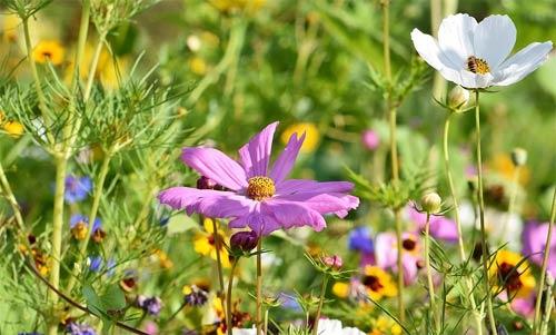 Quelle est la meilleure période pour planter des fleurs sauvages ?