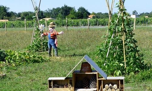 exemple de jardin en permaculture