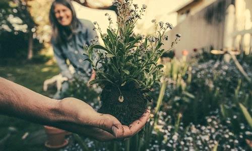 jardinage-biologique