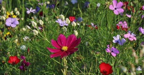 exemples de fleurs sauvages