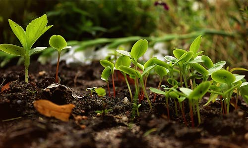 semis permaculture