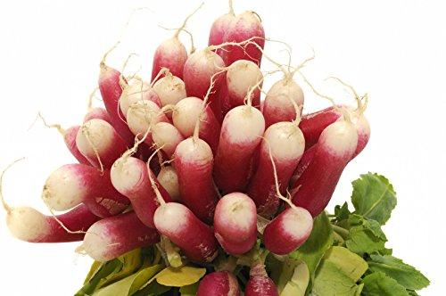 150 graines Bio – RADIS Long de 18 jours – Certifié AB – Raphanus sativus