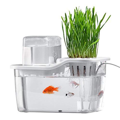 EQS Mini Aquarium pour Jardin Aquatique, Aquarium pour système de Culture Hydroponics avec des Choux Bio Aquaponic et Un…
