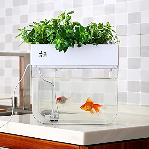 Huamuyu Hydroponique Jardin Aquaponique Aquaponique Système de croissance Auto-Nettoyage Semences Bac de germe