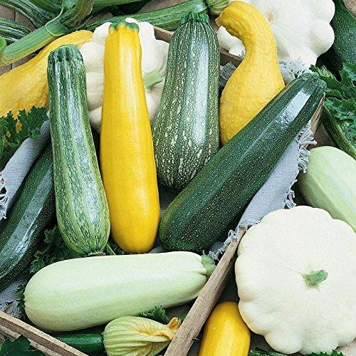 Risitar Graines – 50pcs Rare Mélange de courgettes (jaune, verte et blanche), Graines biologiques Graines de légumes résistante au froid
