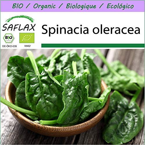 SAFLAX – BIO – Epinard – Matador – 300 graines – Spinacia oleracea