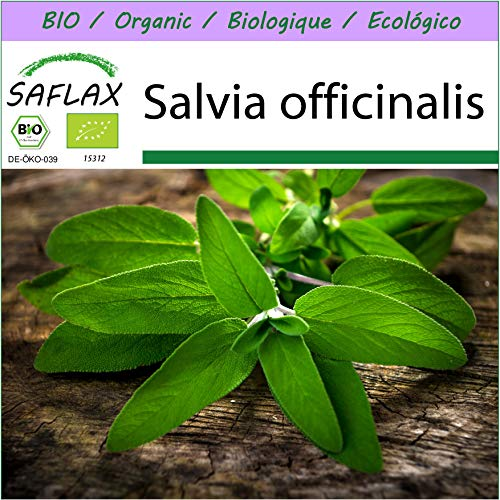 SAFLAX – BIO – Sauge – 60 graines – Salvia officinalis