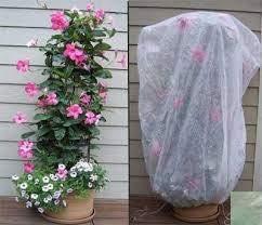 UniEco Housse de Protection pour Plantes Sac Non-tissé d'hiver Serre Tente pour Fleurs Étagère 150x125x30cm